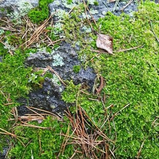 Камни в Милзкалне