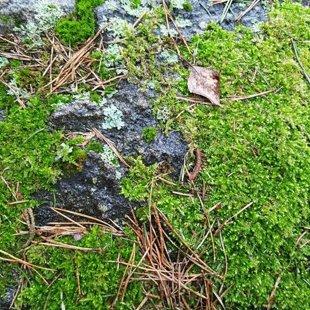 Milzkalne stones